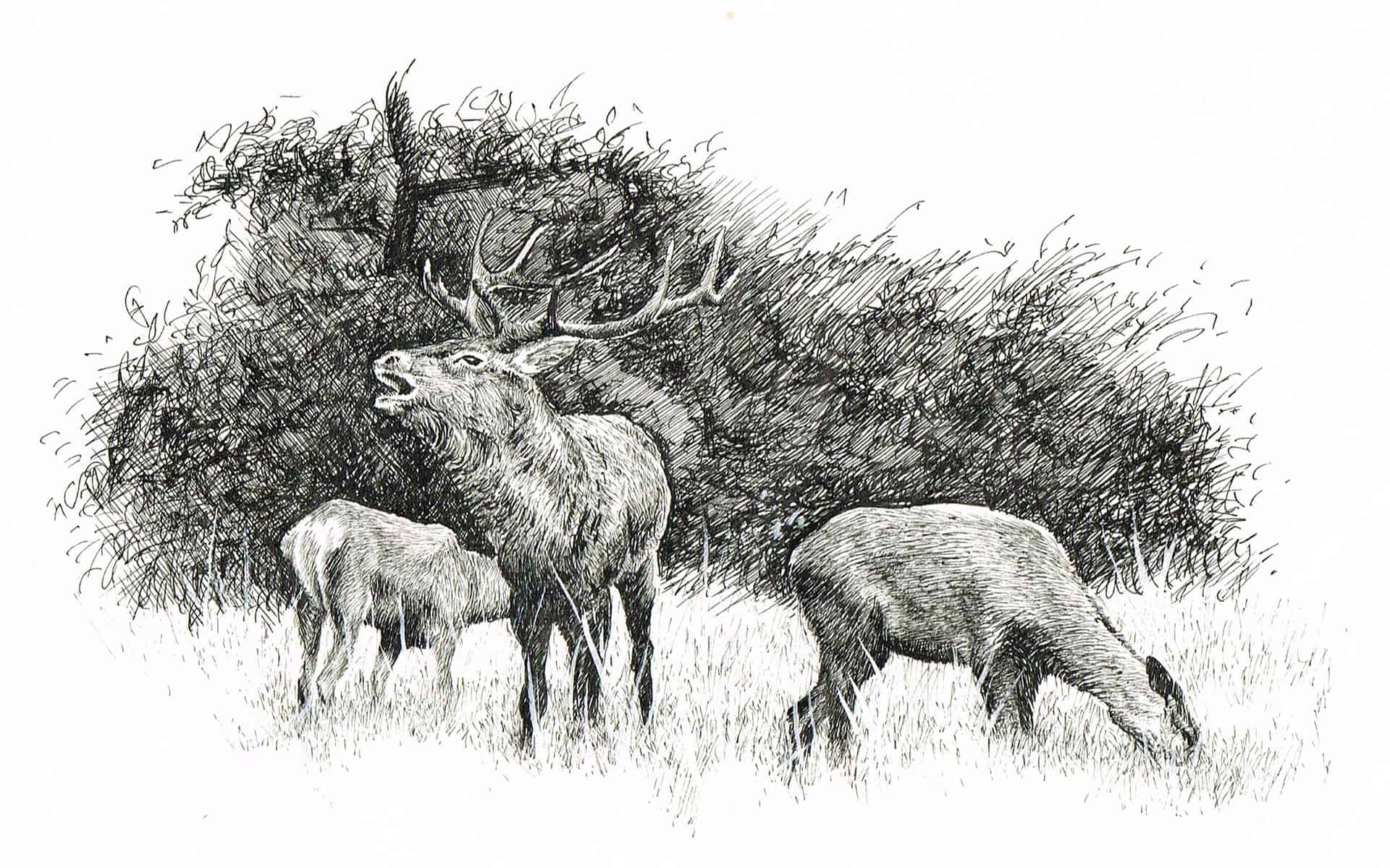 stag-woods-gary-drew